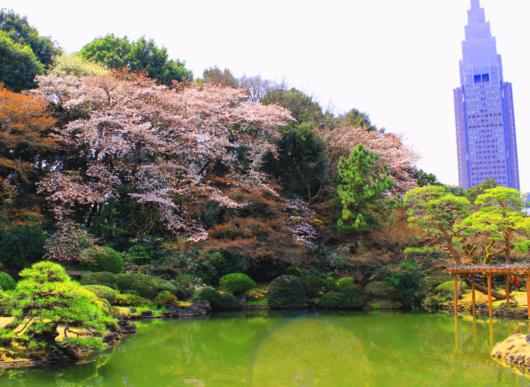 新宿御苑 画像